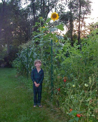Jack and Sunflower