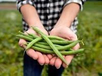 Mujer con arverjas verdes en un campo, 10 Hierbas y verduras más fáciles de plantar en su jardín
