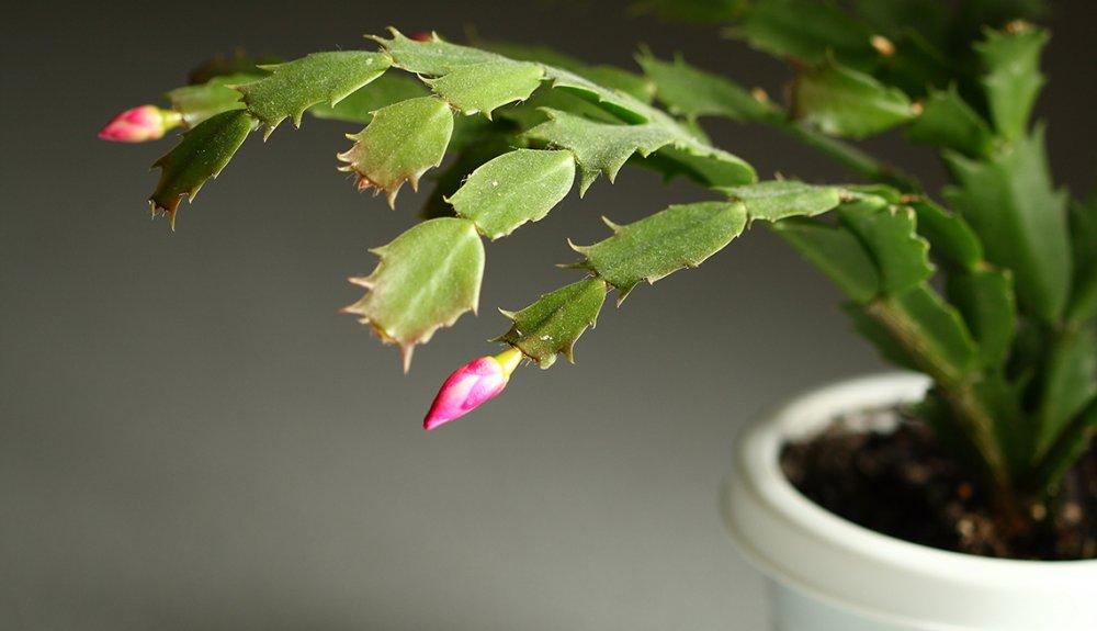 Plantas resistentes que requieren poco cuidado - Cristina Mella
