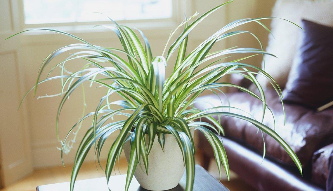 Plantas resistentes que requieren poco cuidado cristina for Plantas decorativas de exterior