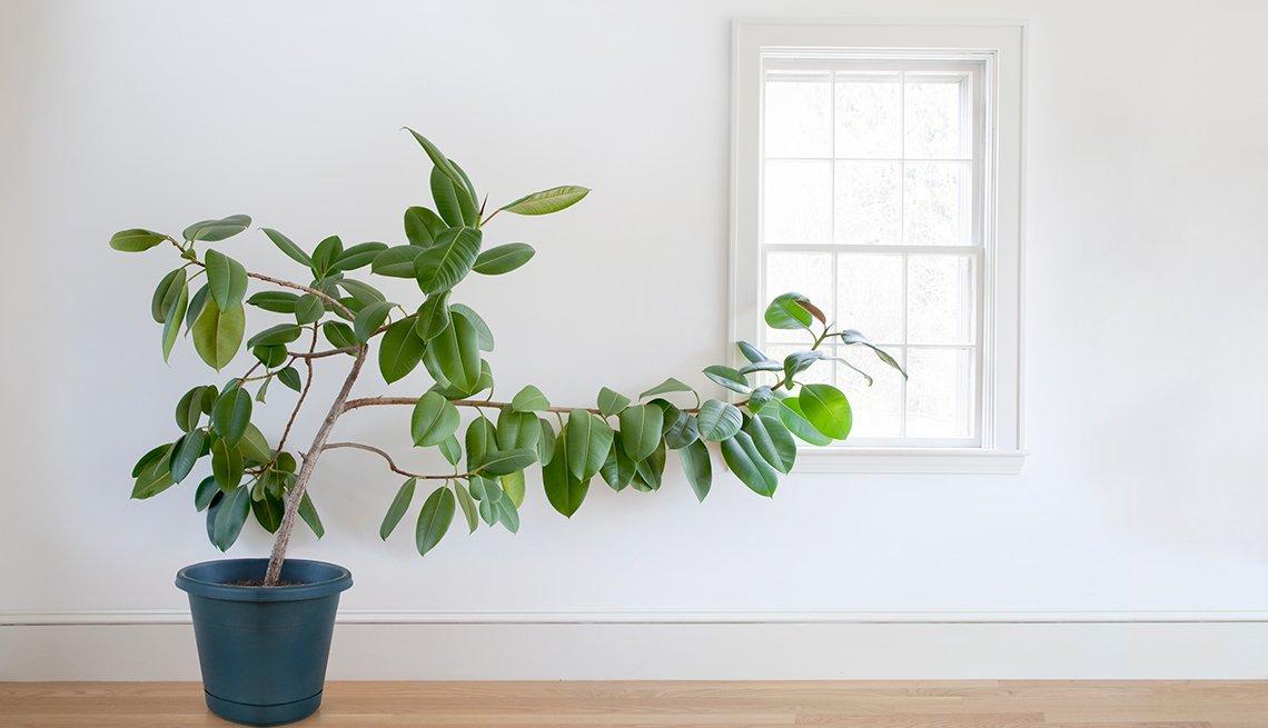 Plantas Resistentes Que Requieren Poco Cuidado