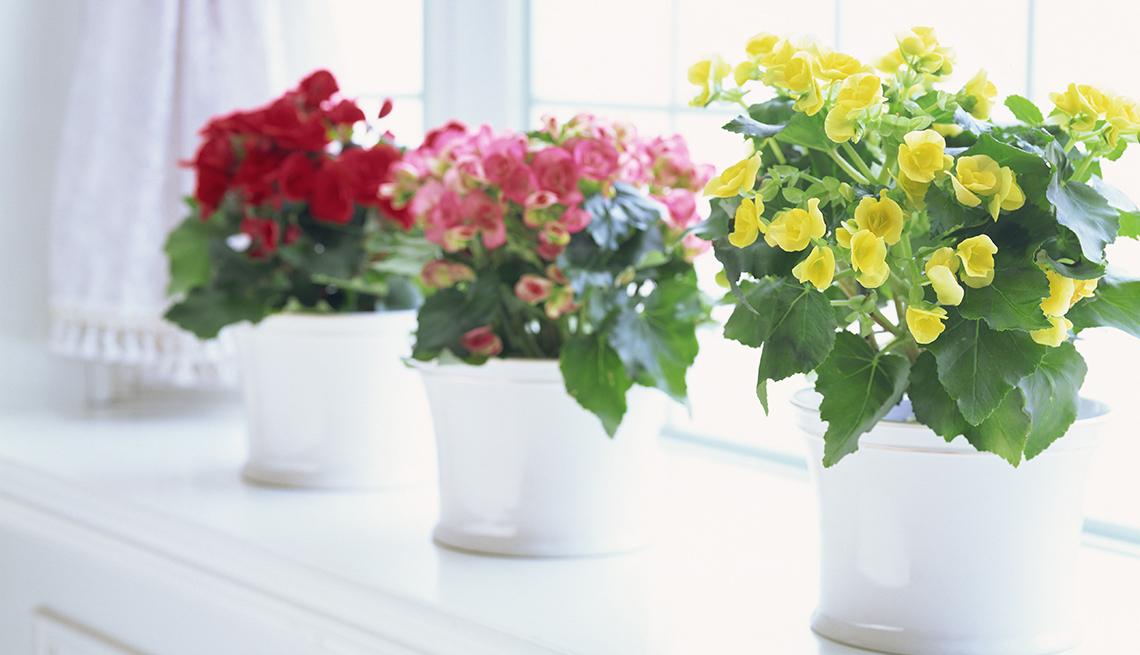 Plantas que sobreviven al peor jardinero