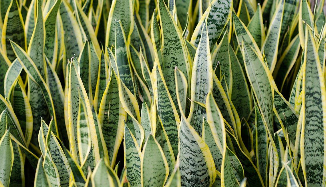 Plantas que sobreviven al peor jardinero - Plantas verdes exterior ...