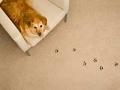 Manchas de perro en el tapete - Arreglos de pequeños accidentes de la casa