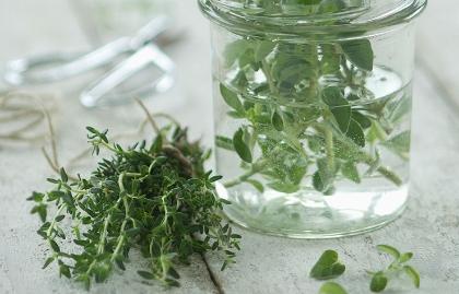 Hierbas y verduras que se cultivan en agua