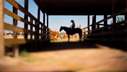 Great sunny places to retire- a cowboy in fort worth, texas