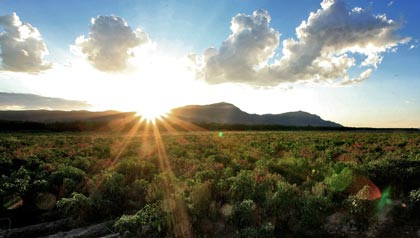 great sunny places to retire- chili pepper fields in las cruces, new mexico