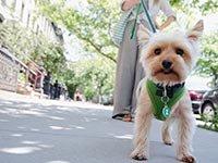 Why Walking is So Popular Again