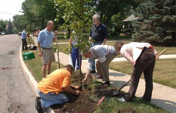 620-DM-PlantingTrees.jpg