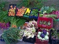 Fresh Start Community Garden harvest
