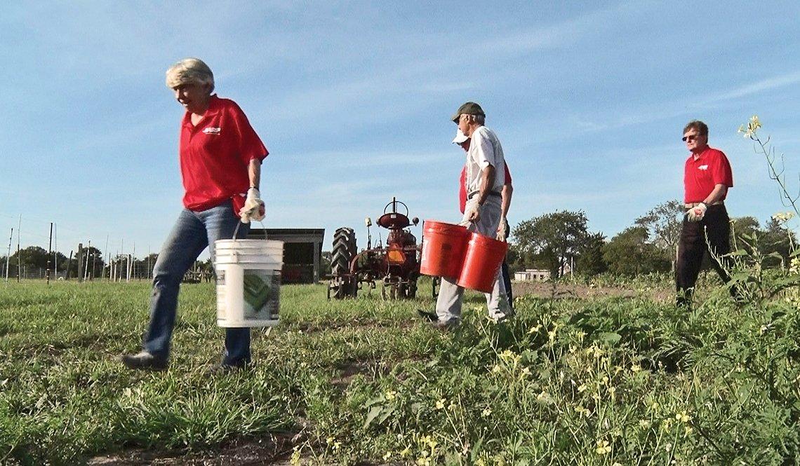 Volunteers from AARP Rhode Island harvest crops at the Jamestown Community Farm