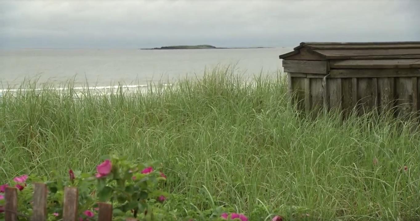 View of Maine beach