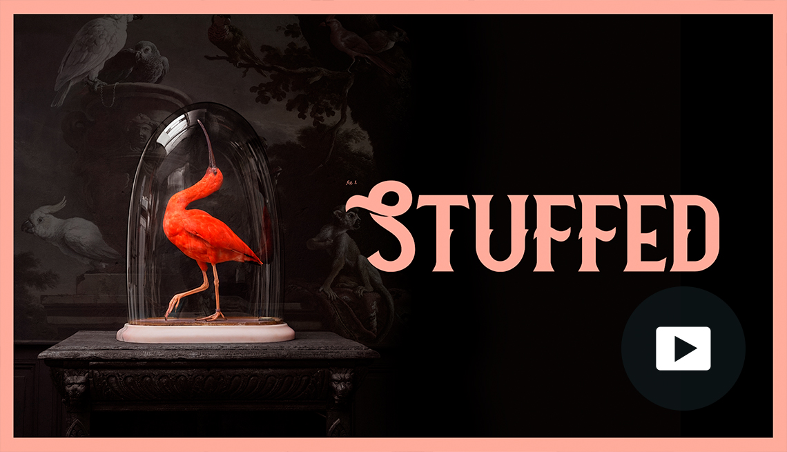 scarlet ibis under antique glass dome on table against black wall with animal images, 'Stuffed' title, and video icon overlay
