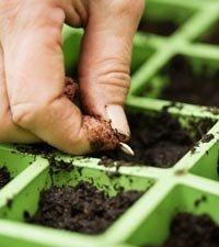 Save Money in the Garden
