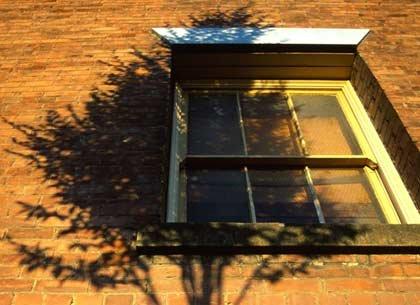 tree shadow on window