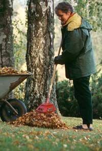 Mujer recogiendo las hojas de los árboles en otoño - Las mejores ofertas en el otoño