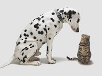 Comparing costs for pet care, dog vs. cat