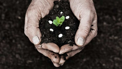 Hombre con una planta en sus manos - artículo de Yeager sobre cosas gratis o en descuento
