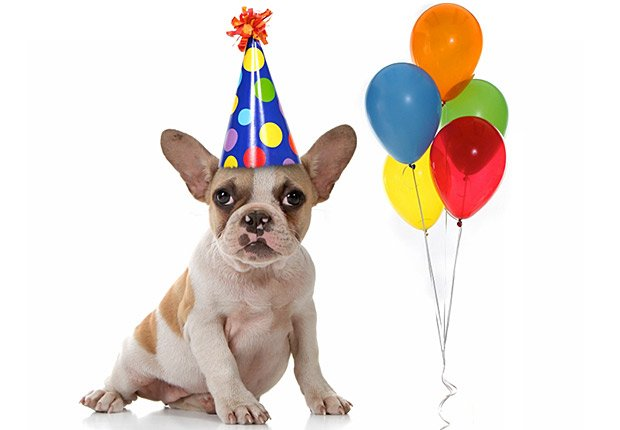 Perro con sombrero de una fiesta de cumpleaños y globos, regalos de cumpleaños y ofertas