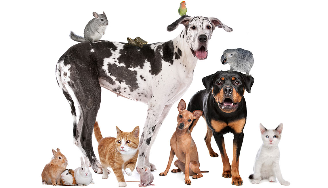 lower Pet expenses -  Pick a Pet to Fit Your Budget