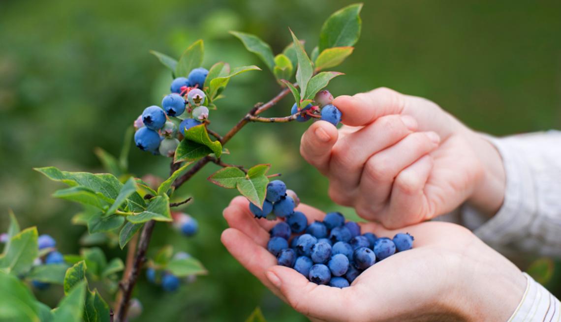 Manos tomando un cultivo de cerezas - Mejores maneras de gastar $200
