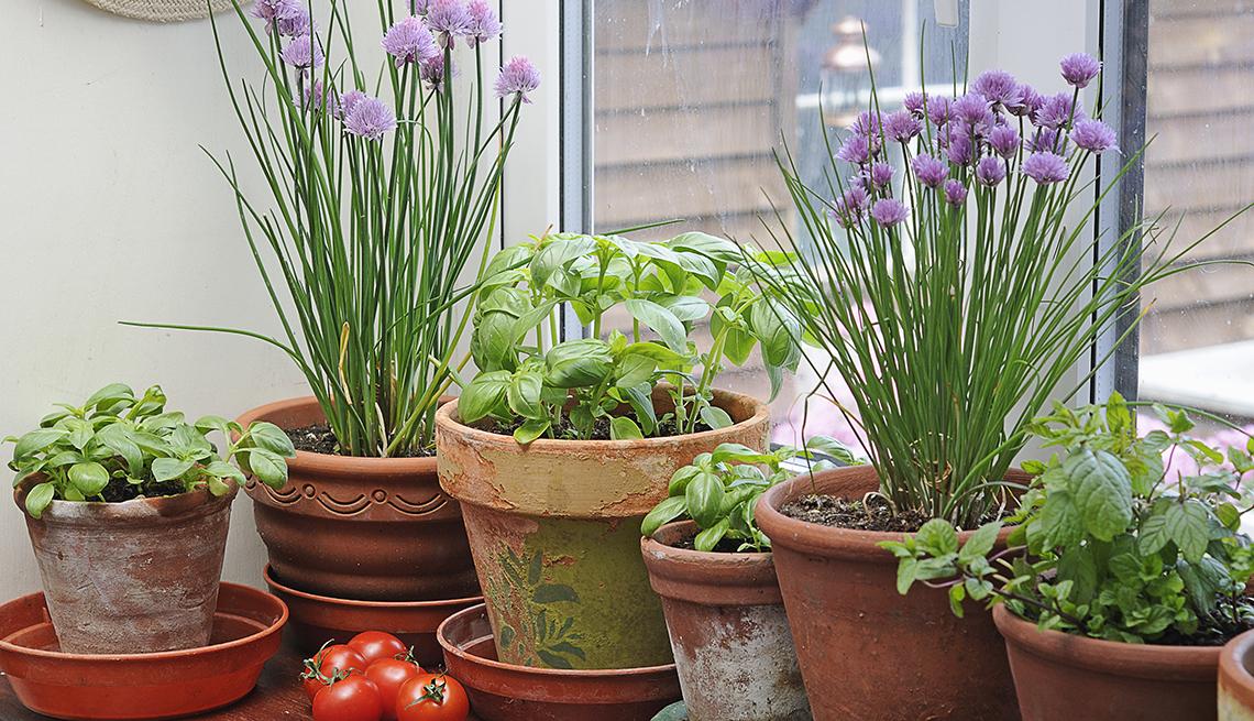 Materas con diferentes hierbas en casa  y formas de gastar $100 dólares