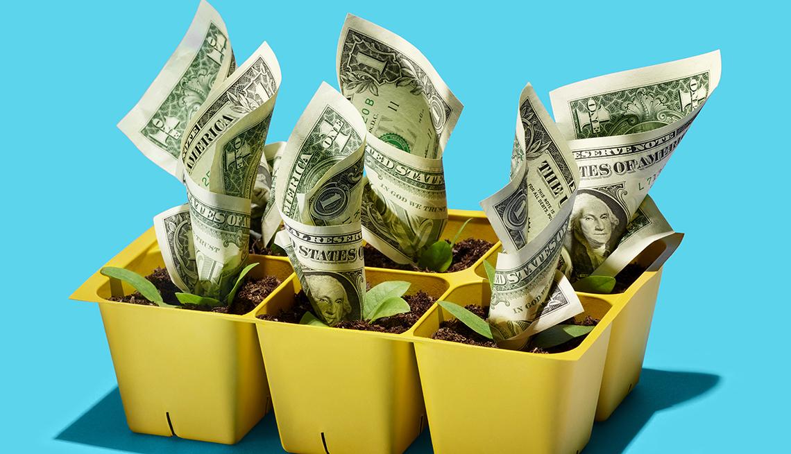 Materas con tierra y dólares sembrados como árboles