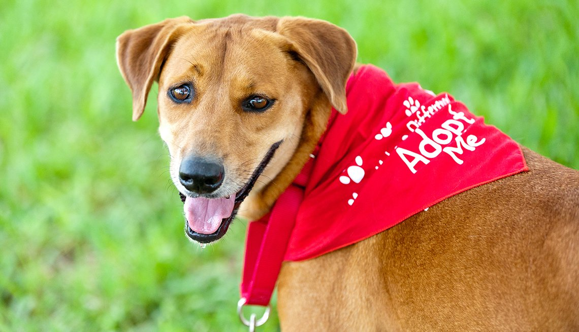 item 10 of Gallery image - Mixed breed dog with Adopt Me bandana