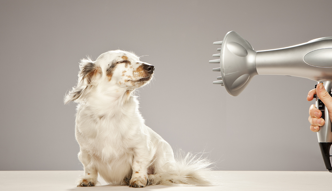 item 9 of Gallery image - Blow dryer blowing on a small dog