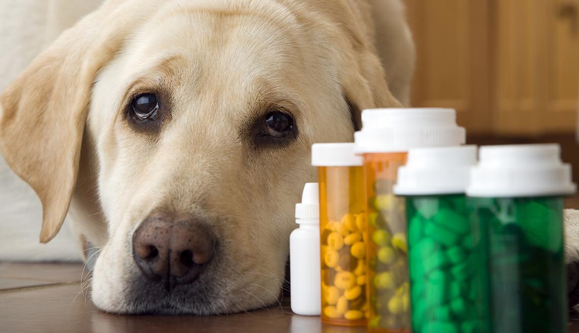 item 8 of Gallery image - Perro al lado de unos frascos de medicina