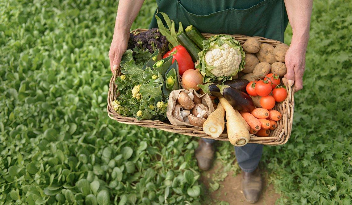 item 11 of Gallery image - Manos sosteniendo una canasta con verduras