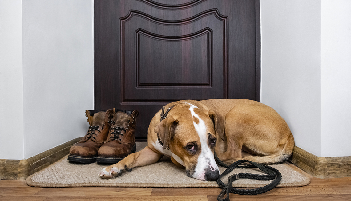 sad-looking staffordshire terrier dog with a leash on, is lying on a doormat near the front door of a home