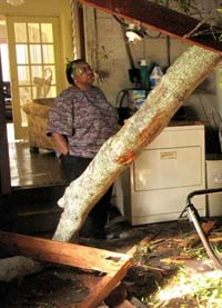 Examining damage from a tree falling through the roof of a house