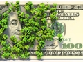 Money hidden behind ivy, unclaimed property