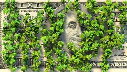Un billete de 100 dólares escondido detrás de la hiedra, la propiedad no reclamada
