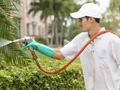 Gardener sprays pesticide outdoors.
