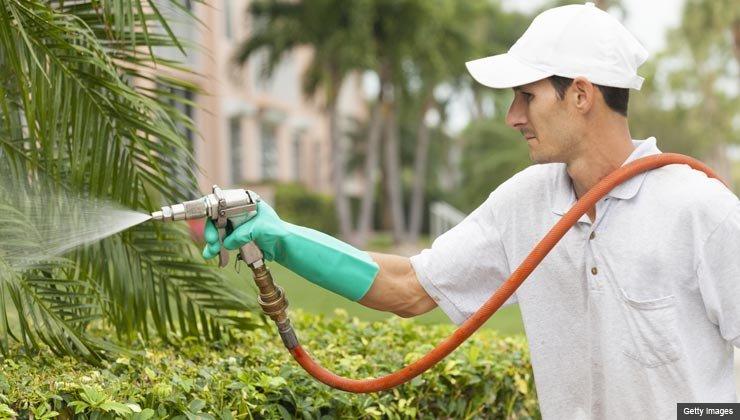 Gardener sprays pesticide outdoors.