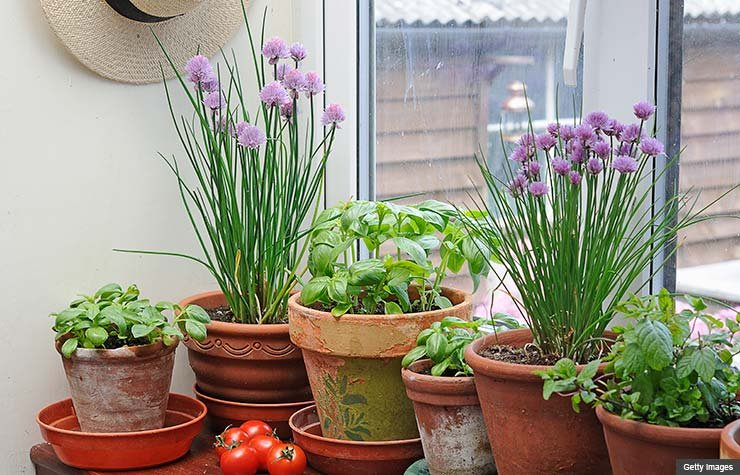 Un jardín en su casa - Las mejores maneras de gastar $100