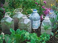 Plastic bottles reused to grow seedlings, Spring gardening