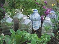Plastic bottles reused to grow seedlings, Spring gardening