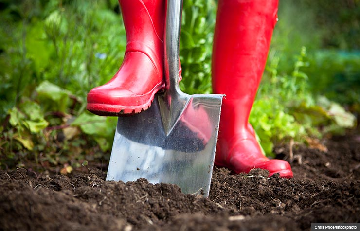 Red boots and shovel in garden, Prepare for spring gardening