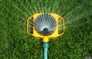Use a sprinkler that sprays large drops close to the ground.