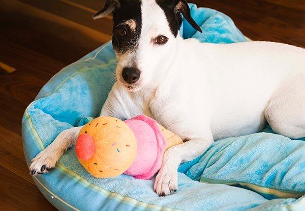 Comprar juguetes para sus mascotas. 10 spending regrets.