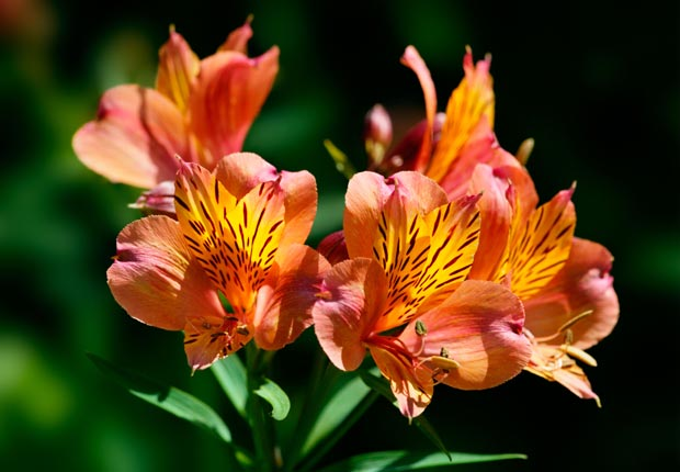 Plant perennials.  $100 or less DIY home fixes. (Susie McCaffery/Alamy)
