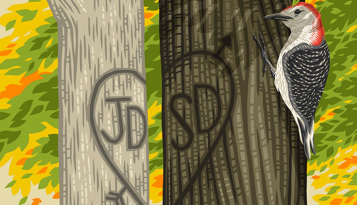 Ilustración de un pájaro carpintero y dos árboles con un corazón tallado.