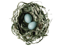 nest egg, retirement, money, chatzky, savings, robin's eggs