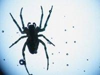 Una araña en un vidrio