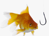 Gold fish and hook - Five ways to avoid email spam
