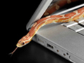 Snake slithers over laptop - malware symptoms and what to do if your computer becomes infected.
