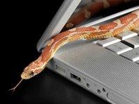 La serpiente se desliza sobre laptop - síntomas de malware y qué hacer si su ordenador se infecta.